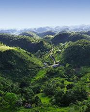 Green-Jamaica